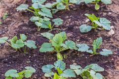 crecimiento-hortalizas.jpg