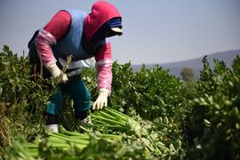 cosecha-hortalizas.jpg