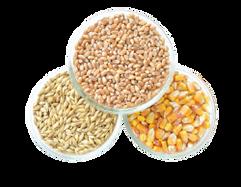 semillas.png