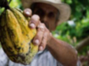 cultivo-cacao.jpg