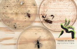 efecto en insectos.jpg