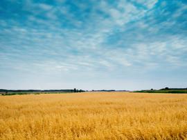 sky-clouds-field-blue.jpg