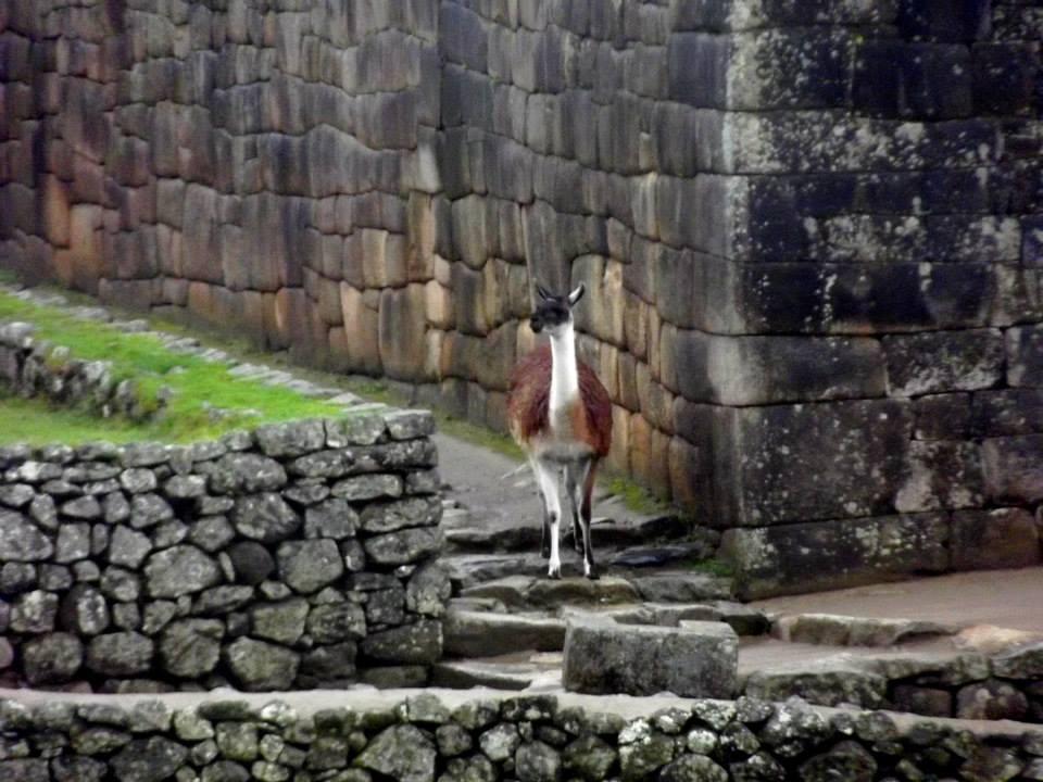 Viaggi nozze in 4x4 in Peru-4.jpg