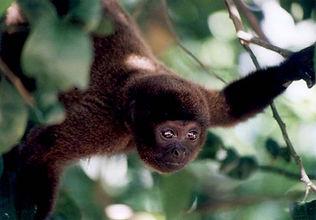 Viaggi in Amazzonia Peruresponsabile