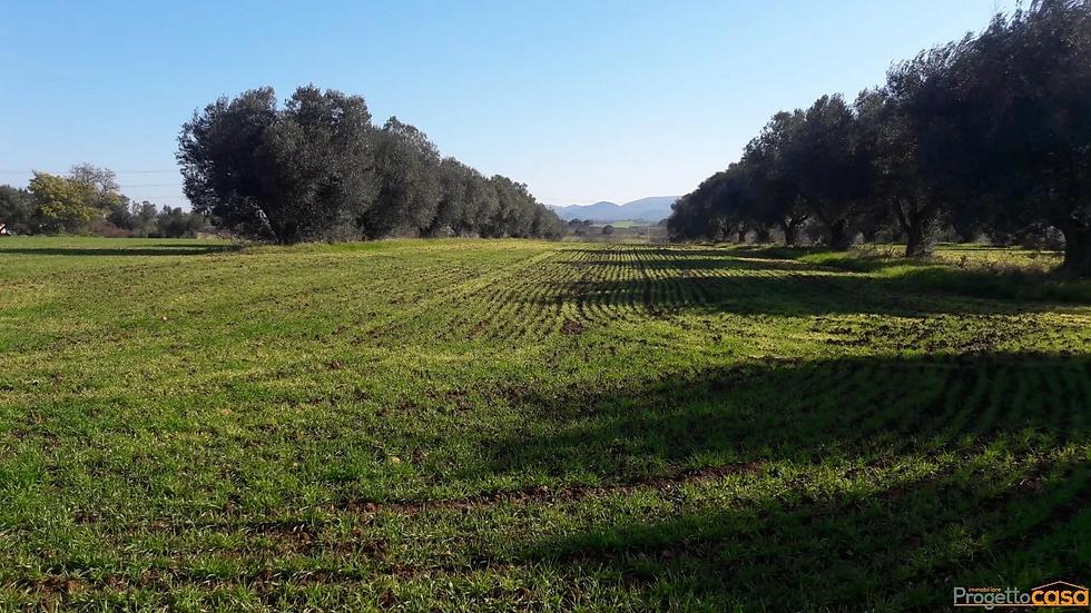 progettocasa vende terreni a civitavecch