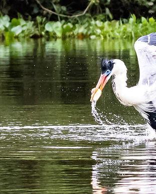 northern_pantanal_1.jpg