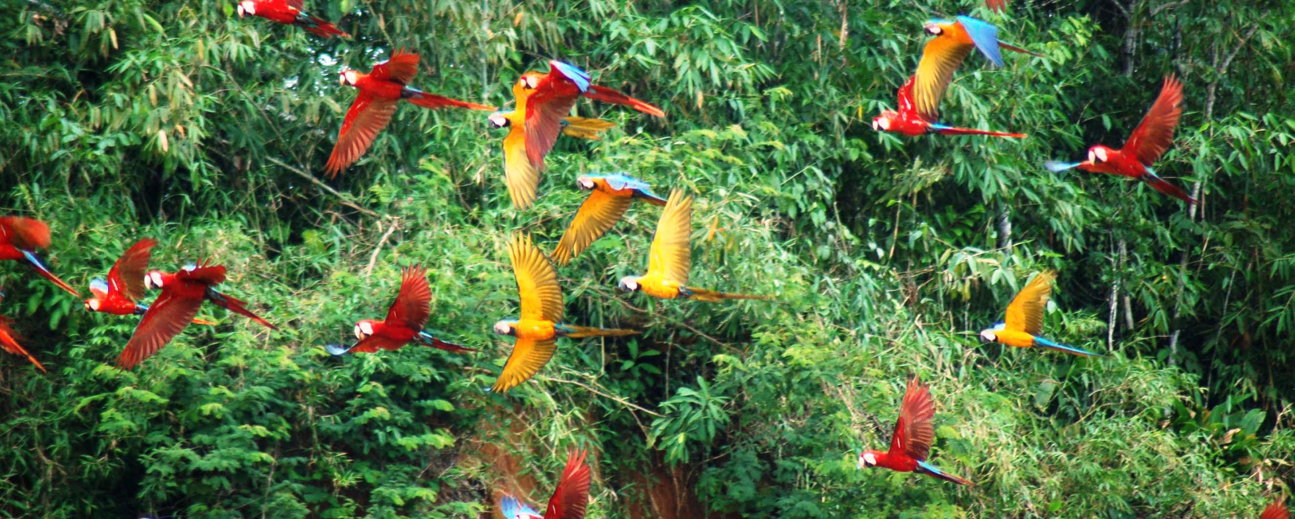 AMAZZONIA TAMBOPATA  turismo  E VIAGGIO responsabile etico e solidale in peru ww