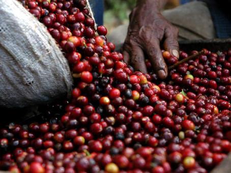 I bucatini al caffè del Huehuetenango del Guatemala!