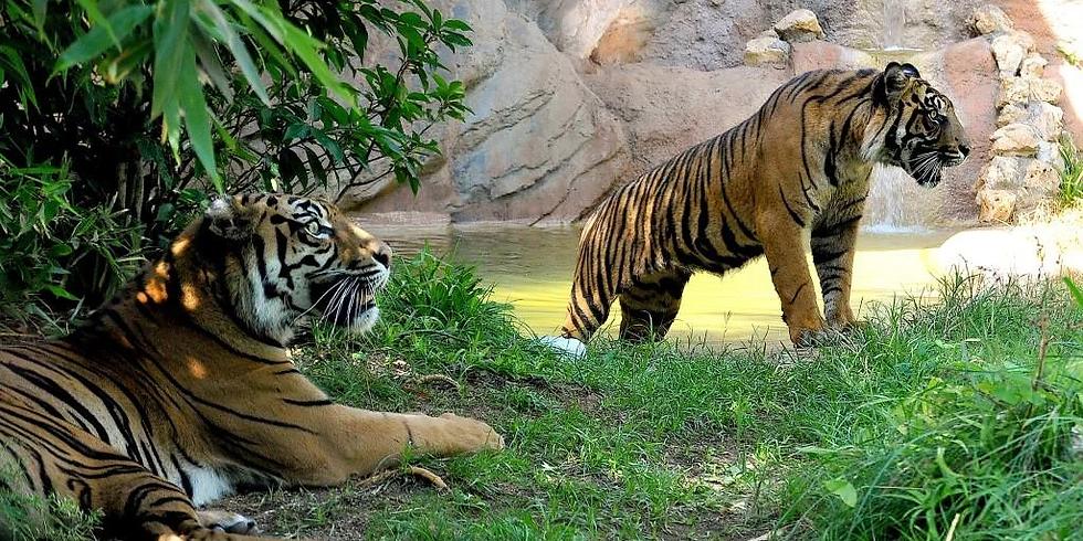 WALK | Passeggiata Zoologica, Sulle tracce di Emilio Salgari