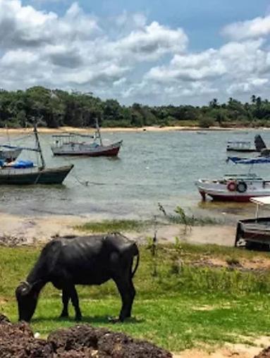 isola_di_Marajo_viaggi_brasile