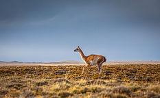 Estensione Patagonia e Peru con Peruresponsabile