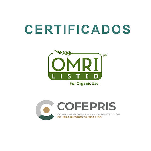 certificados2.jpg