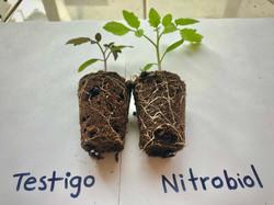 Testigo vs Nitrobiol®