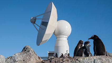 Antenne und Pinguine.jpg