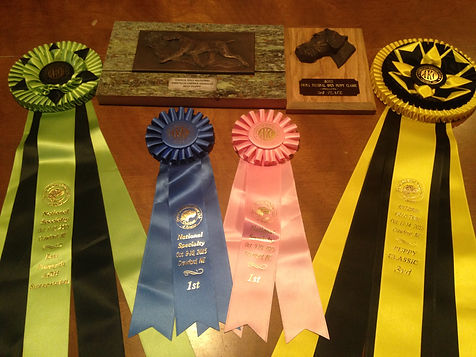 Plaques And Ribbons From The German Wirehaired 2015 Nationals