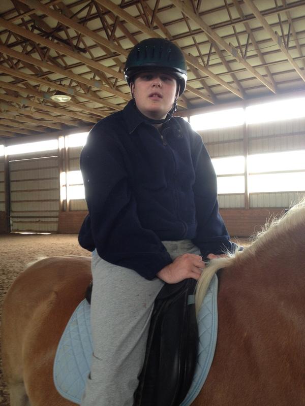 WB horse
