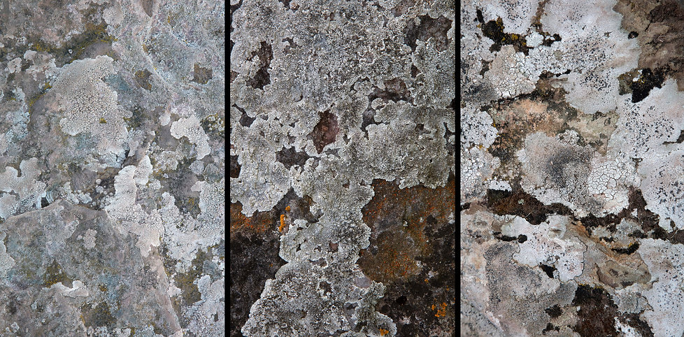 SYMBIOSIS Dorstone low res triptych 7800