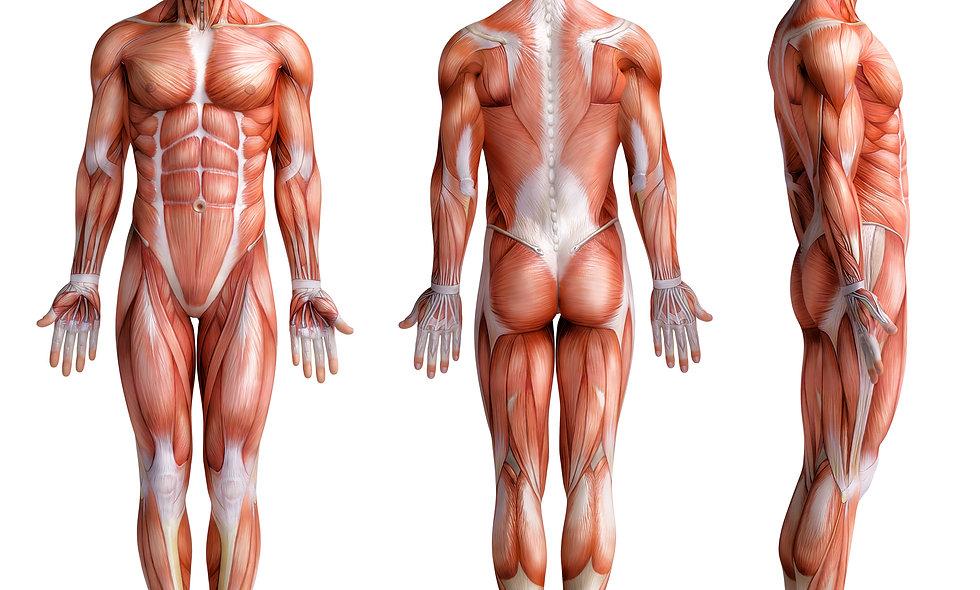 Postural -Corrective Body Alignment Exercises