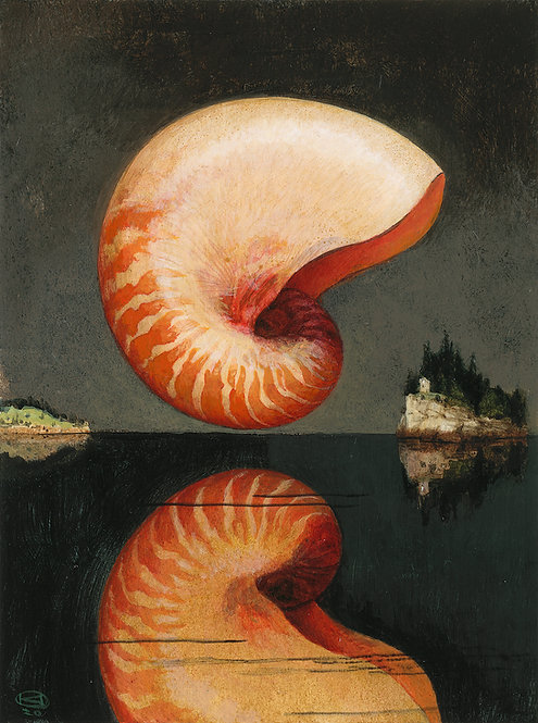 Nautilus Shell on Paper      Two sizes from: