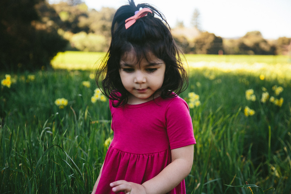 filoli daffodil field