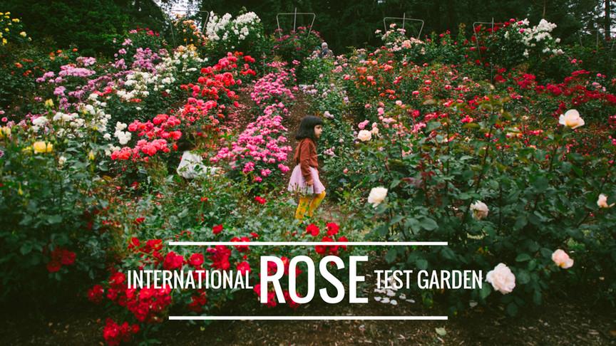 Portland's International Rose Test Garden