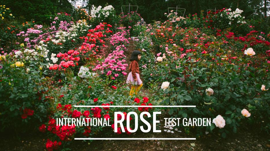 Portland S Rose Garden