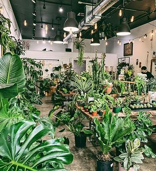 Gurtons Plant Shop