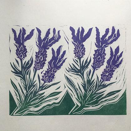 'French Lavender'