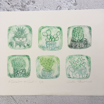 'A Collection of Cacti'