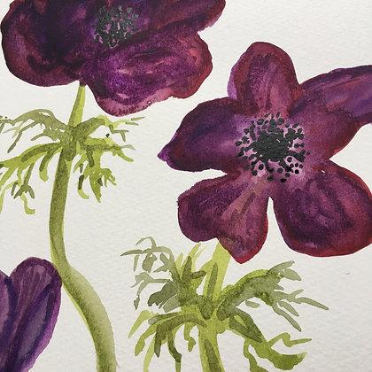 'Anenome Flowers'
