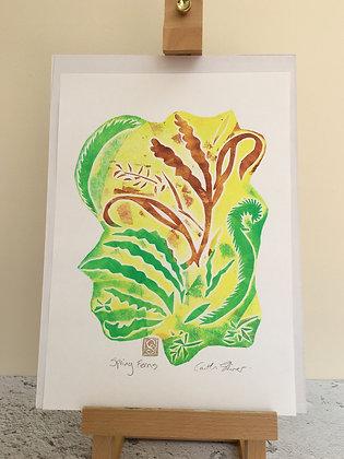 'Spring Ferns'