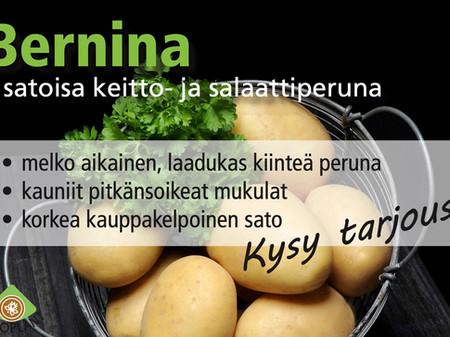 Berina - satoisa keitto. ja salaattiperuna