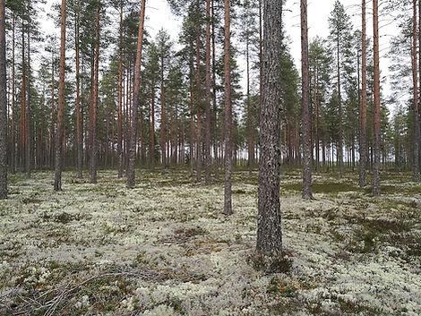 Metsänhoitotyöt ammattitaidolla