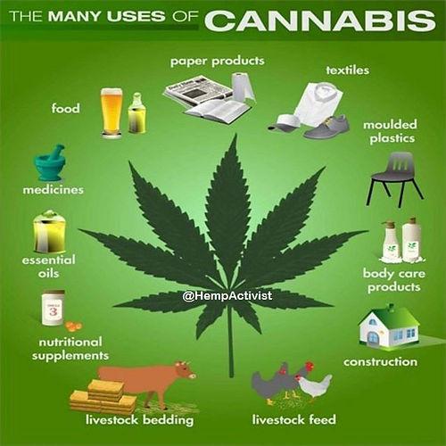 cannabis-many-uses-1.jpg