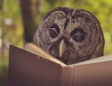 owl-with-glasses-reading.jpg