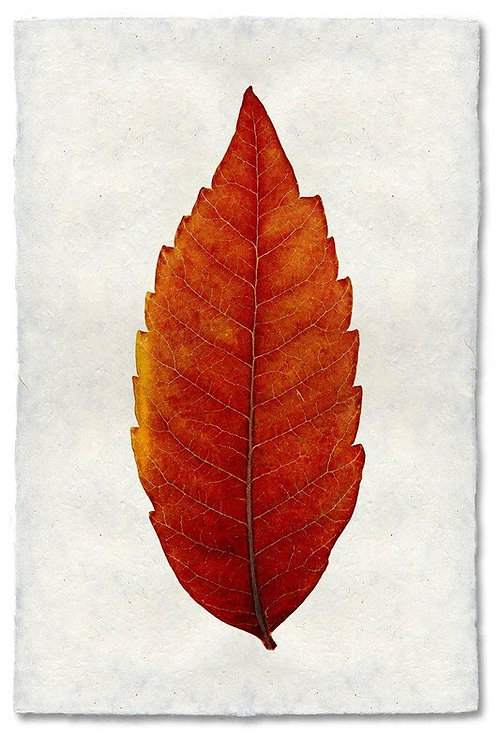 SUMAC LEAF STUDY ON NEPALESE PAPER