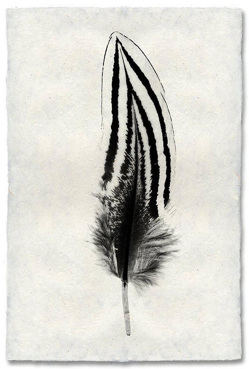 FEATHER STUDY #2 (SILVER PHEASANT) ON NEPALESE PAPER