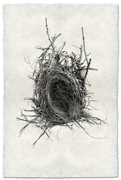 NEST STUDY #3 ON NEPALESE PAPER