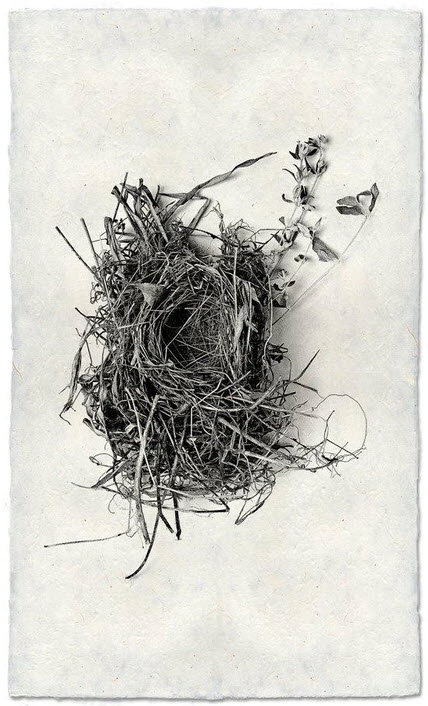 NEST STUDY #1 ON NEPALESE PAPER