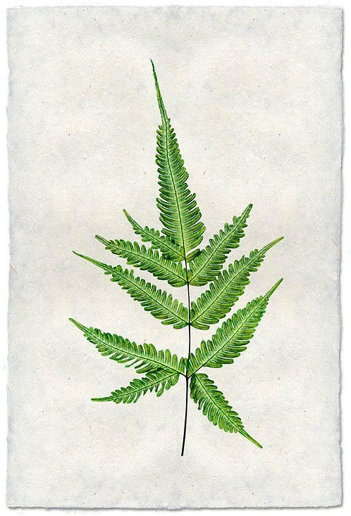 FERN #2 STUDY ON NEPALESE PAPER