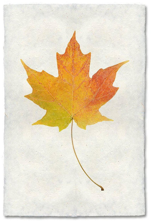 MAPLE LEAF STUDY ON NEPALESE PAPER