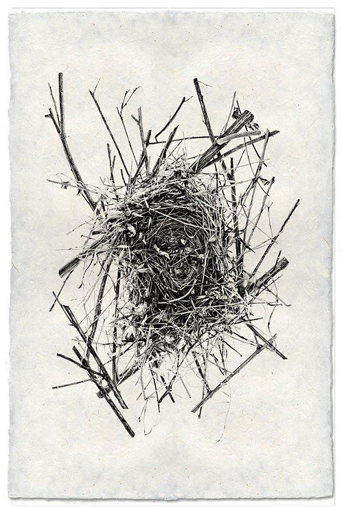 NEST STUDY #4 ON NEPALESE PAPER