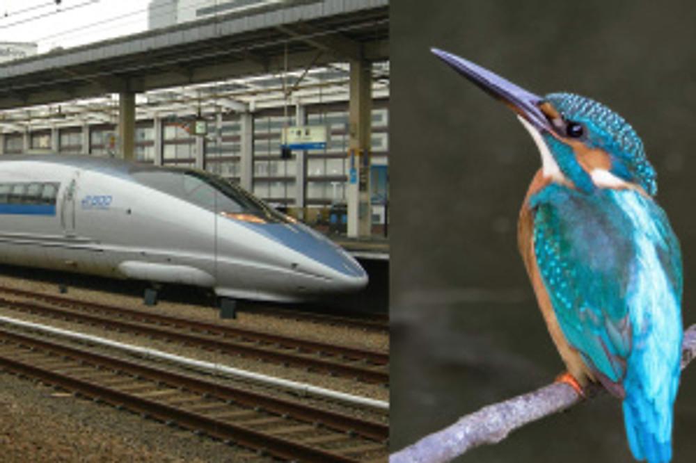 train_bird_comparison_crop-729ec57f51d51e1fd9205d29c2424e4e
