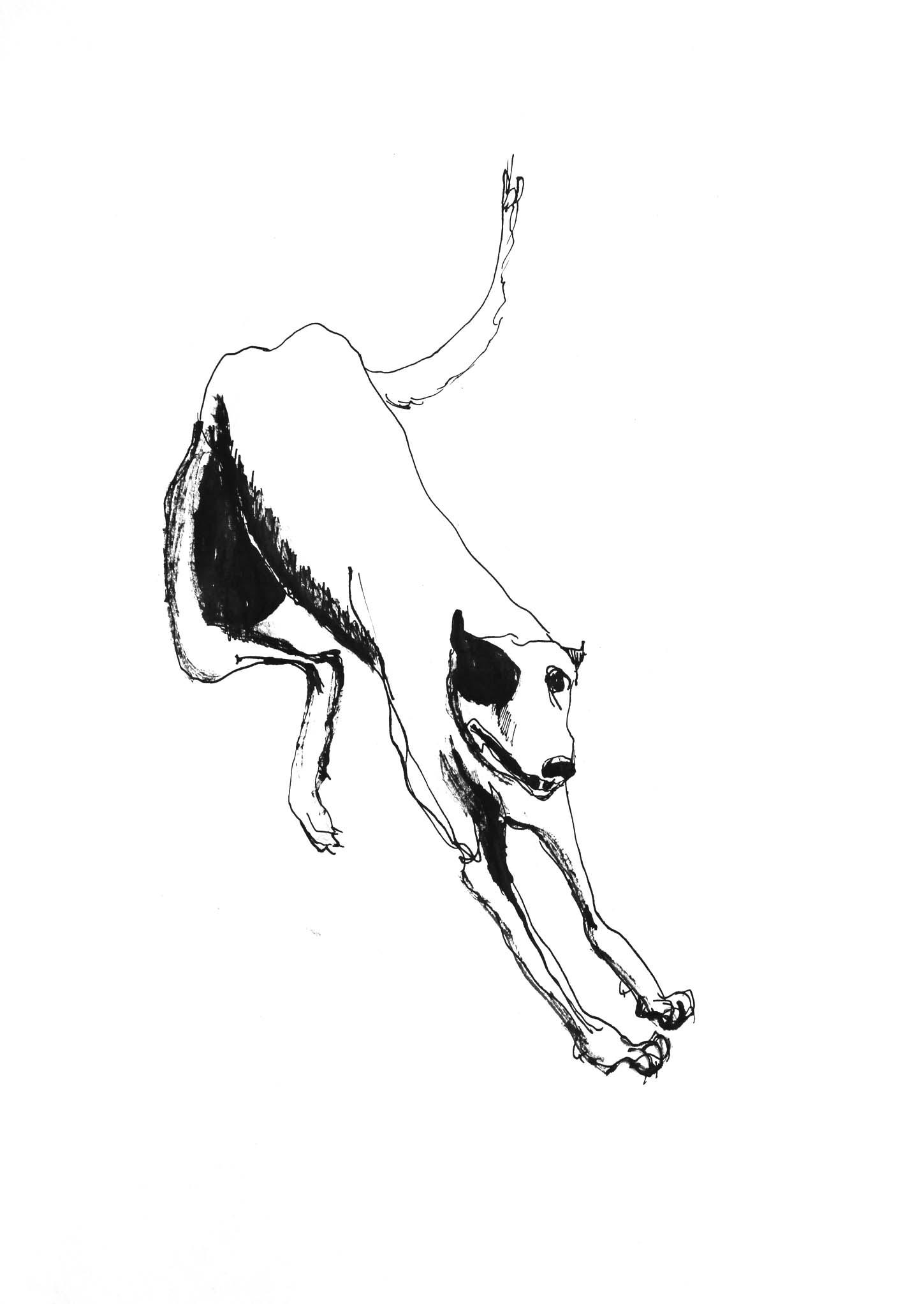 Landing Dog
