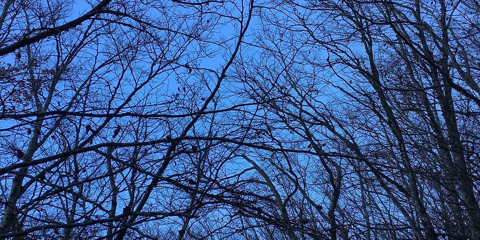 Rhythms of Nature - YULE - seizoensritueel voor de WINTER