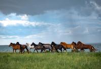 The steppe 20200705 OSPANALI.JPG