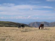 Пасущиеся лошади.jpg