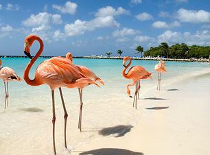 aruba  flamingos.jpg