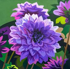 Purple Dahlia's