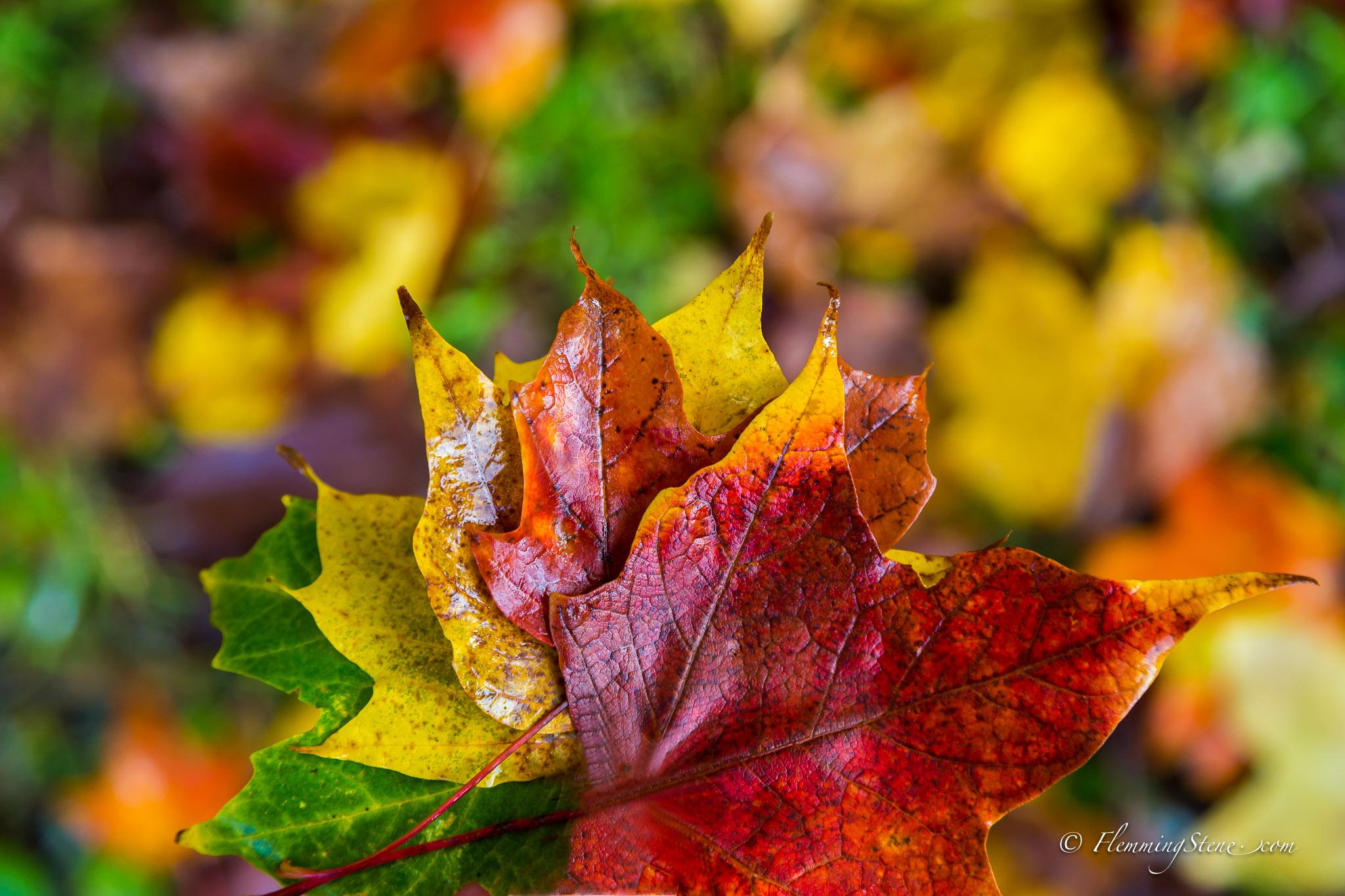 Multicolour autumn